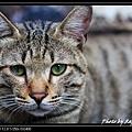 cute cat 05.jpg
