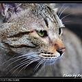 cute cat 06.jpg