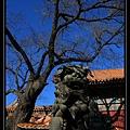 Lama Temple (3).jpg