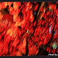 CNY Macau 09  (46).jpg