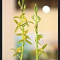 Orchid 09 (41).jpg