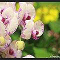 Orchid 09 (47).jpg