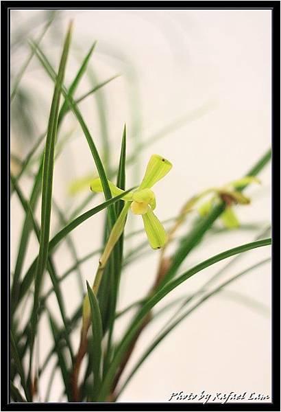 Orchid 09 (34).jpg
