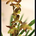 Orchid 09 (44).jpg
