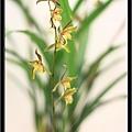 Orchid 09 (46).jpg