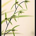 Orchid 09 (29).jpg