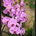 Orchid 09 (49).jpg