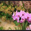 Orchid 09 (52).jpg