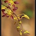 Orchid 09 (55).jpg
