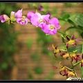 Orchid 09 (53).jpg