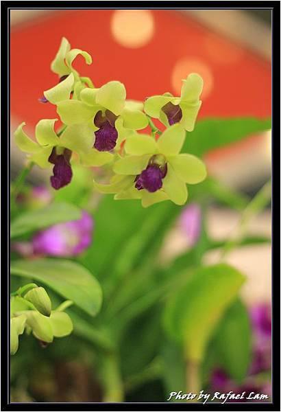Orchid 09 (15).jpg