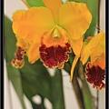 Orchid 09 (5).jpg
