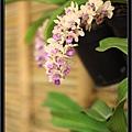 Orchid 09 (56).jpg