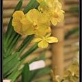 Orchid 09 (58).jpg