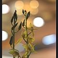 Orchid 09 (42).jpg
