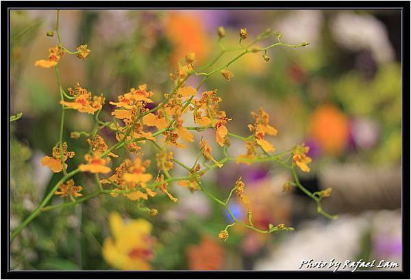 Orchid 09 (79).jpg