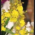 Orchid 09 (80).jpg