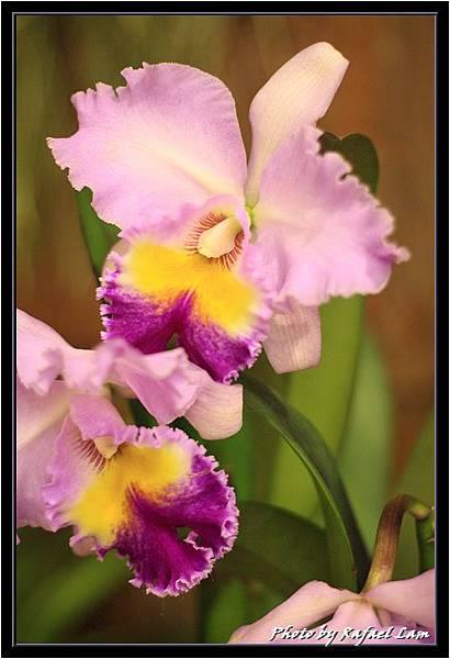 Orchid 09 (1).jpg