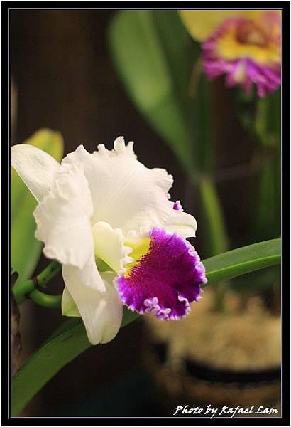 Orchid 09 (6).jpg