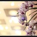 Orchid 09 (62).jpg