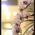 Orchid 09 (63).jpg