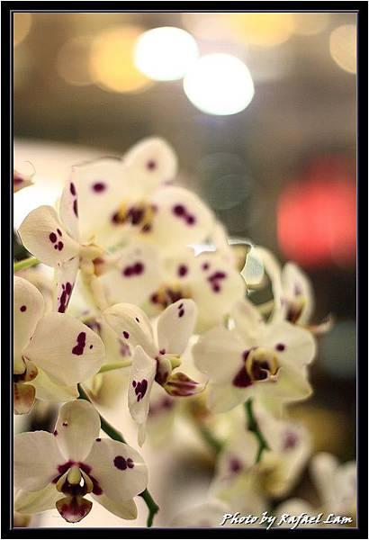 Orchid 09 (64).jpg