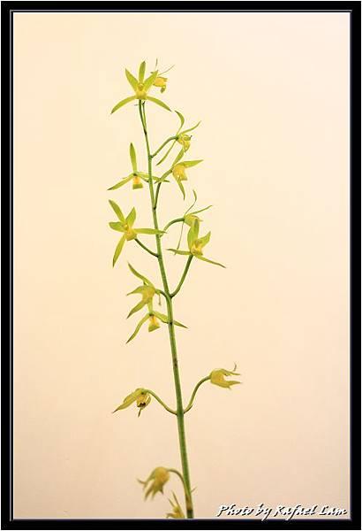Orchid 09 (30).jpg