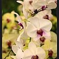 Orchid 09 (61).jpg