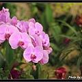 Orchid 09 (50).jpg