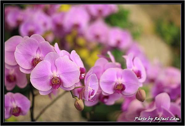 Orchid 09 (51).jpg
