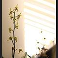 Orchid 09 (43).jpg