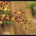 Orchid 09 (72).jpg