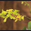 Orchid 09 (71).jpg