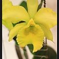 Orchid 09 (9).jpg