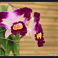 Orchid 09 (10).jpg