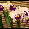 Orchid 09 (13).jpg
