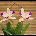Orchid 09 (14).jpg