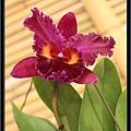 Orchid 09 (2).jpg