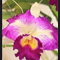 Orchid 09 (4).jpg
