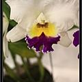 Orchid 09 (8).jpg