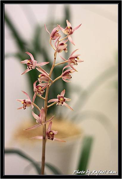 Orchid 09 (37).jpg