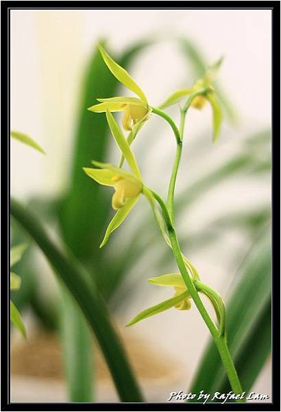 Orchid 09 (33).jpg