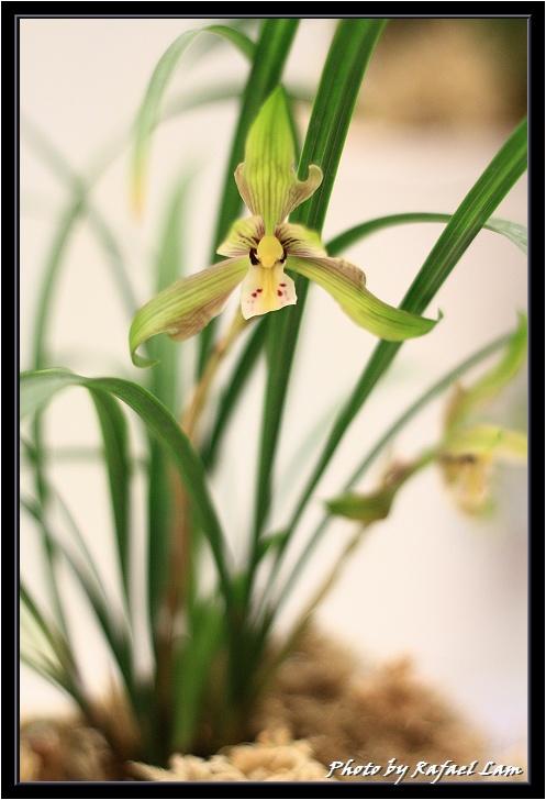 Orchid 09 (48).jpg