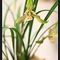 Orchid 09 (19).jpg