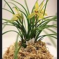 Orchid 09 (20).jpg