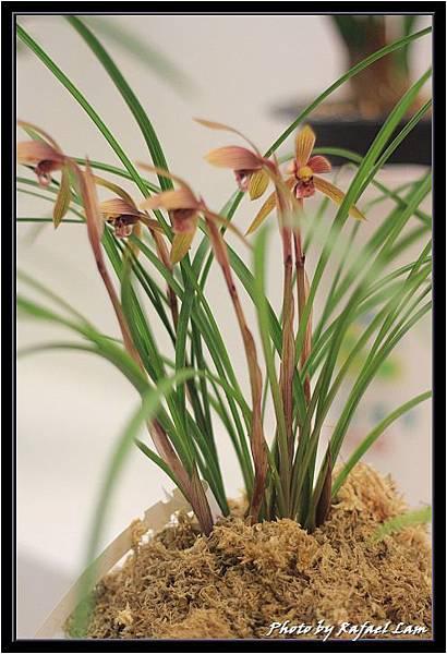Orchid 09 (25).jpg