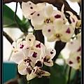 Orchid 09 (73).jpg