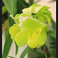Orchid 09 (16).jpg