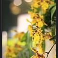 Orchid 09 (69).jpg
