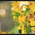 Orchid 09 (70).jpg